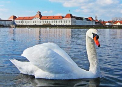 Germany-swan-3270439