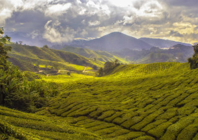 Malaysia-Cameron Highlands-Photo by Paul-Vincent Roll on Unsplash-c61jL_NpAn8